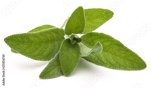 Keuken foto achterwand Aromatische Sage herb leaves bouquet isolated on white background cutout.