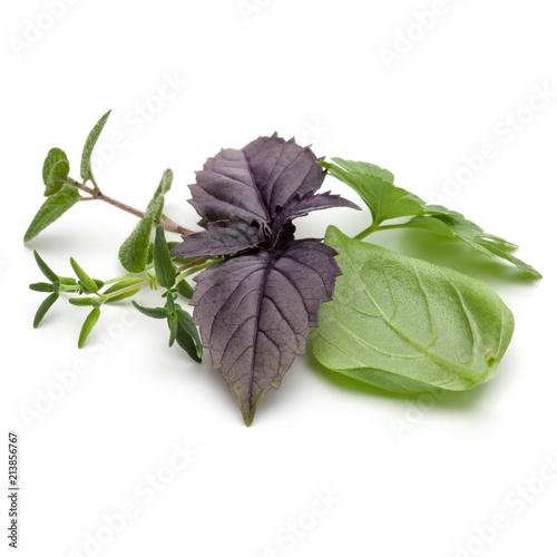 Deurstickers Aromatische Fresh herb leaves variety isolated on white background. Purple dark opal basil, sweet basil, oregano, thyme, parsley.