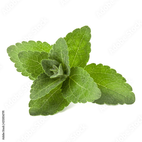 Deurstickers Aromatische Stevia leaves pieces isolated om white background cut out.