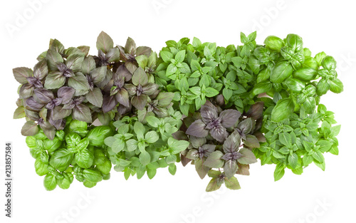 .Varieties of basil  border arrangement isolated on white background cutout. Top view..