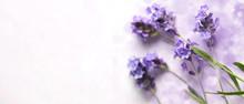 Fresh Lavender Flowers On Pink...