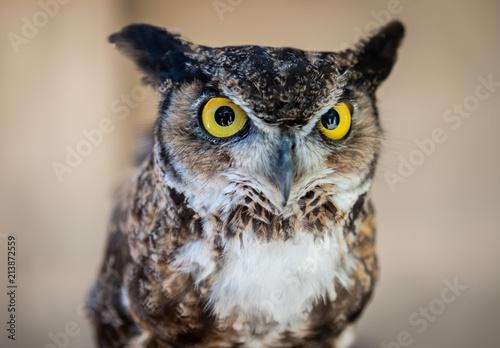 Fotobehang Uil Owl