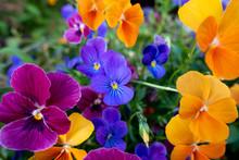 Floral Colour Explosion