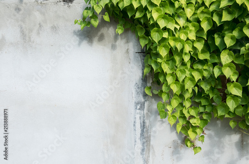 Obraz na plátne background with tree branches, Green leaf and background concept,beautiful green