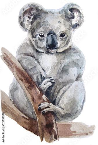 akwarela-australijska-koala-na-otreby