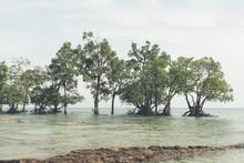 Mangrove Tree At Vijaynagar Beach At Havelock Island,