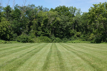 Lines Of A Mowed, Green, Grass Field Are Shown, Ending At A Forest Tree Line.