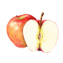 Hand Drawn Watercolor Red Apples Composition, Two Fruits Wuth Cut Half, Isolated On White Background. Delicious Food Illustration.