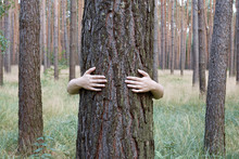 A Young Woman Hugging A Tree Trunk In A Forest