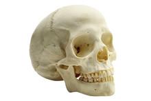 Human Skull Isolated On White Background