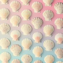 Creative Seashell Pattern On G...