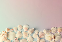 Creative Seashell Pattern On Gradient Pastel Pink And Blue Background. Summer Flat Lay.