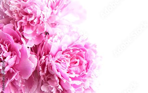 Beauty pink peony flowers