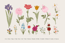 Classical Botanical Illustrati...