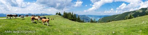 Foto op Plexiglas Panoramafoto s Panorama Alm im Salzkammergut