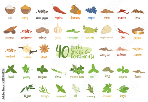 Foto Set of 40 different culinary herbs, species and condiments in cartoon style