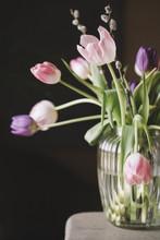 Fresh Tulips In Vase