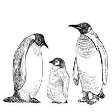Penguin Sketch. Hand Drawn Vector Illustration.