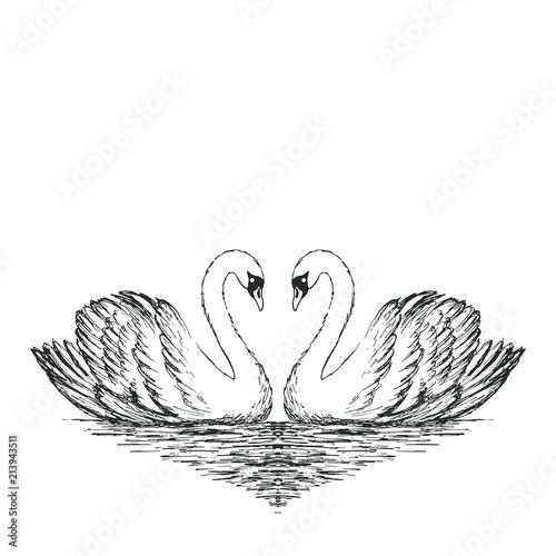 Fototapeta Two swans sketch. Hand drawn vector illustration.