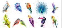 Watercolor Birds Set Vector. P...