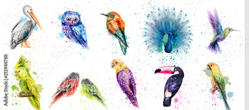 Watercolor birds set Vector. Peacock, owl, pelican, parrot, humming birds collections