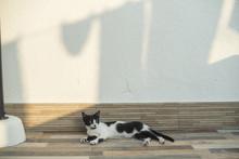 Retrato De Un Pequeño Gato Blanco Y Negro Al Atardecer Con La Sombra De Ropa Tendida