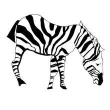 Black White Zebra Sketch
