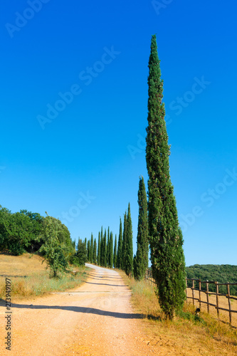Fotografiet  Country road flanked with cypresses in Tuscany, Italy