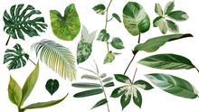 Tropical Leaves Variegated Foliage Exotic Nature Plants Set Isolated On White Background, Clipping Path With Plant Common Name Included (Monstera, Palm Leaf, Devil's Ivy, Ginger, Bamboo, Etc.).