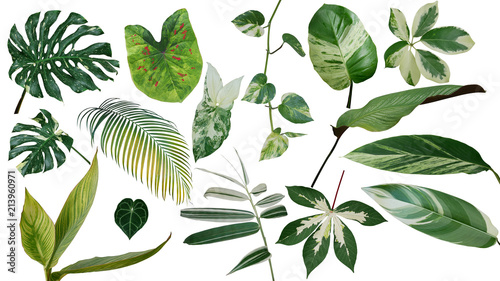 Poster Vegetal Tropical leaves variegated foliage exotic nature plants set isolated on white background, clipping path with plant common name included (Monstera, palm leaf, Devil's ivy, ginger, bamboo, etc.).