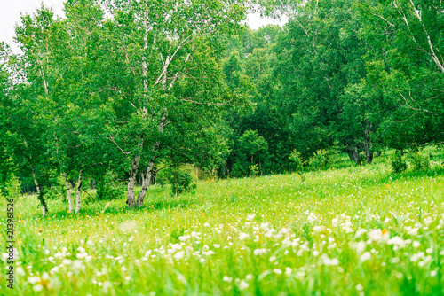 Photo Stands Spring The Ulan prairie in the midsummer