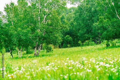 In de dag Bomen The Ulan prairie in the midsummer