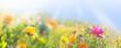 canvas print picture - Bunte Wiese mit Wildblumen -  Sommer  -  Banner  -  Panorama