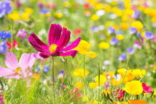 Wild Flower Meadow On A Summer...