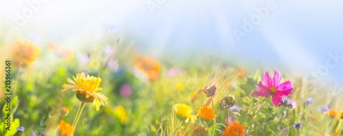 Bunte Wiese mit Wildblumen -  Sommer  -  Banner  -  Panorama