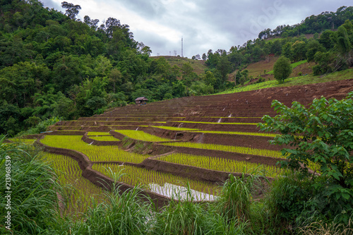 Poster Rijstvelden rice field step in Chiangmai, north of Thailand
