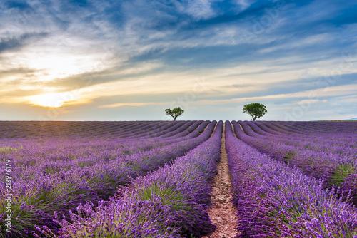 Schilderijen op glas Landschap Champ de lavande à Valensole en Provence, France