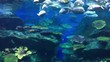 Tropical fish and natural corals under water world