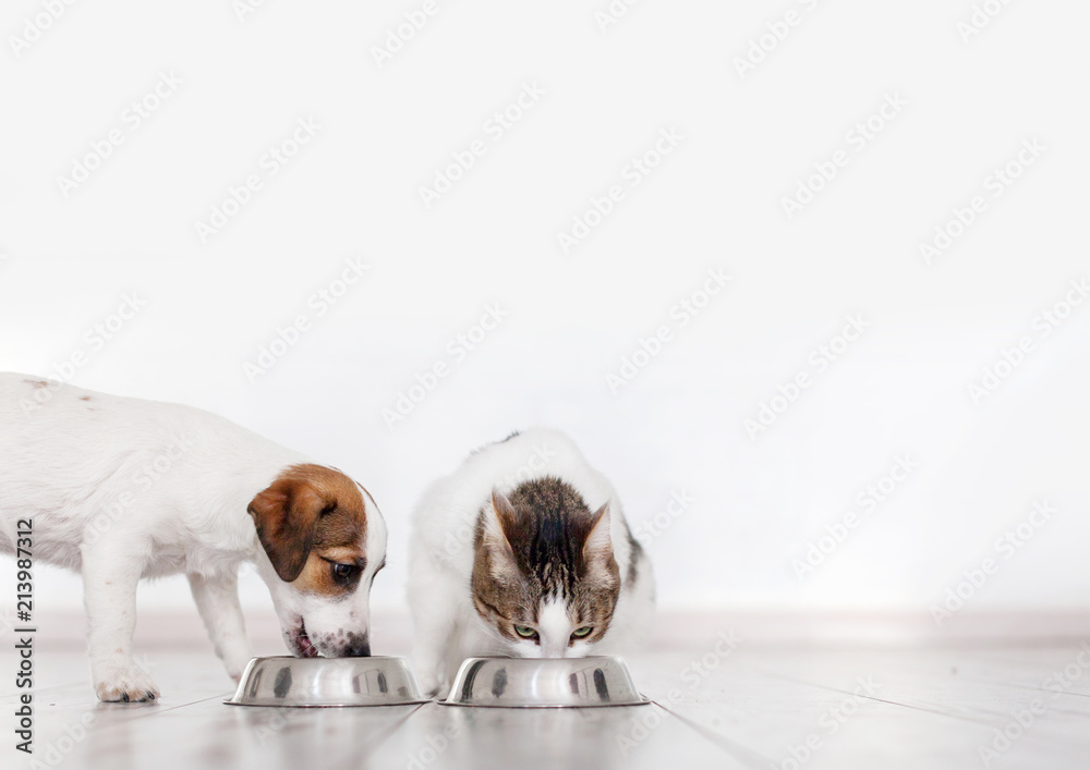 Dog and cat eating food
