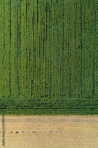 Foto op Plexiglas Luchtfoto Scenic agricultural fields. Aerial view.
