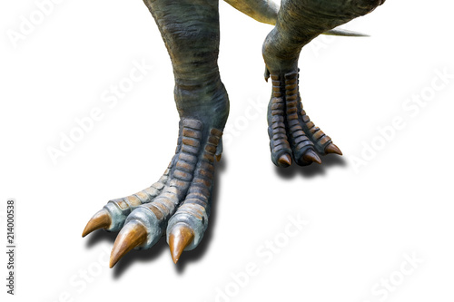 Valokuva  Tyrannosaurus ( T-rex ), Dinosaur feet walking of Tyrannosaurus ( T-rex ) on a white background