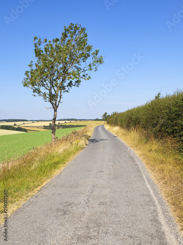 Foto op Canvas Bleke violet country road and ash tree