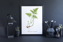 Stylish Black Desk With Mock Up Photo Frame, Lamp,black Accessories And Plant. Black Backgrounds Wall. Design Space In Minimalistic Interior.