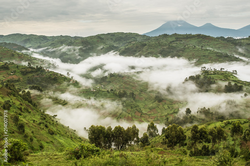 Fotografija Typical hilly landscape full of fields partially covered in fog near the Bwindi