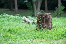 森の中の切り株