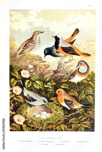 Photo  Collection of illustrated birds.