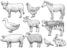 Domestic, Farming, Animal Collection, Illustration, Drawing, Engraving, Ink, Line Art, Vector