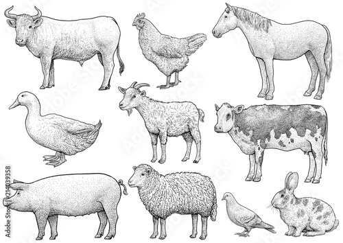 Fototapeta Domestic, farming, animal collection, illustration, drawing, engraving, ink, lin