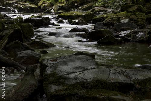 Fototapeten Forest river Fluss im Wald