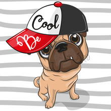 Cute Pug Dog With A Red Cap